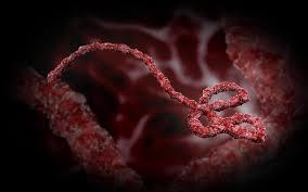 Ebola: i Ministri Esteri discutono nuove misure contro il virus